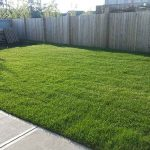 best-sod-in-edmonton